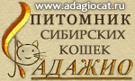 Питомник сибирских кошек Адажио
