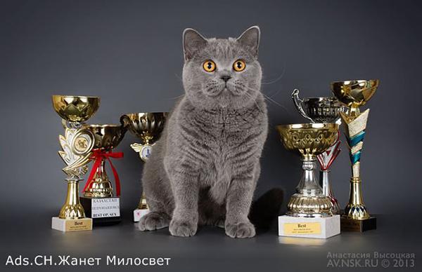 Ads.Ch Жанет Милосвет