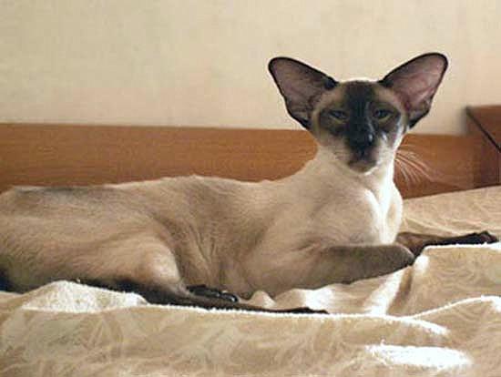 Richard_Porcelain_Cats